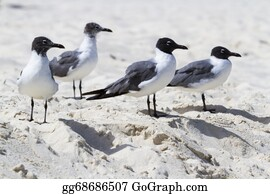 Cancun - Seagulls
