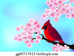 Cardinal-Bird - Red Bird Sitting On Cherry Tree Blo