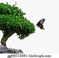Bonsai - Photo Of  Butterfly Silhouette Sitting On A Bonsai Tree, Both Isolated In White Background  Stylized And Filtered To Look Like An Oil Painting