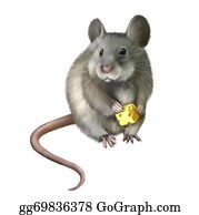 Furry-Tail - House Mouse Eating Piece Of Cheese