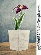 Flower-Pot - Flower Pot With Sketched Flower