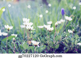 Bush-Of-Wild-Flowers -  White Flowers On The Lawn