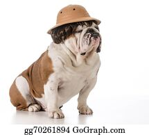 Wig - Dog On Safari