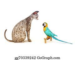 Humor -  Parrot Facing Off To A Cat.