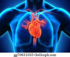 Heart-Surgery - Human Heart Anatomy