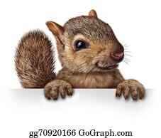 Squirrel - Cute Squirrel