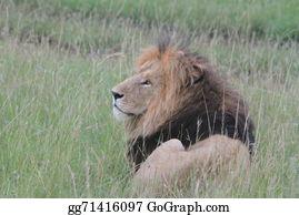 Royal-Lion - Royal Lion, The King