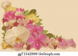 Orchid-Flower - Set Of Orchid Flower Background