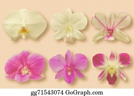 Orchid-Flower - Collection Set Of Orchid Flower Heads