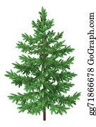 Fir-Tree - Christmas Green Spruce Fir Tree Isolated
