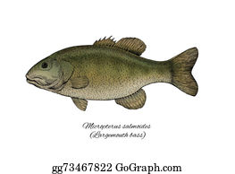 Largemouth-Bass - Largemouth Bass. Colorful Ink Style Fish Collection