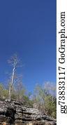 Eucalyptus - Dead Tree And Small Eucalyptus