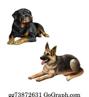 Rottweiler - German Shepard Dog And Rottweiler Laying Down Isolated On White Background