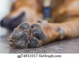 Baby-Footprint - Dog Feet And Legs