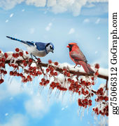 Cardinal-Bird - Birds  In Winter