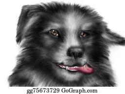 Border-Collie - Border Collie Dog