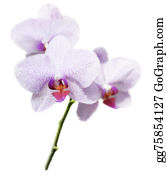 Orchid-Flower - Purple Orchid Flower