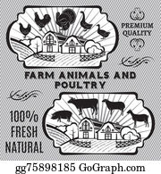 Poultry - Farm Animals And Poultry