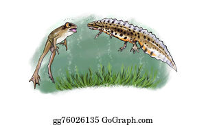 Newt - Newt And Frog Facing