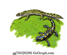 Newt - Tailed Amphibians, Newt And Salamander
