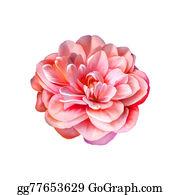 Pink-Rose - Red Pink Rose Flower