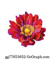 Pink-Rose - Bright Pink Rose Flower
