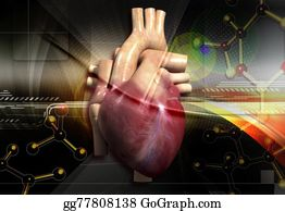 Conduction - Anatomy Of Human Heart