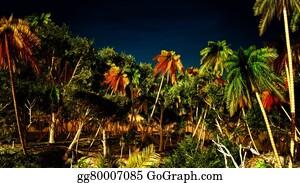 Cancun - Tropical Paradise