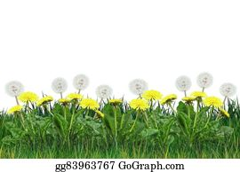 Plant-Life-Cycle - Dandelion Spring Flowers