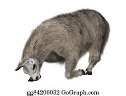 Alpaca - Llama Or Lama On White