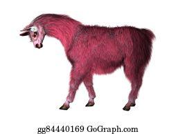Alpaca - Pink Lama On White