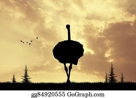 Prairie - Ostrich At Sunset