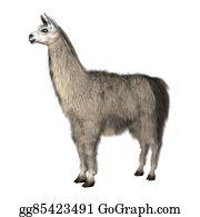 Alpaca - 3d Illustration Lama On White