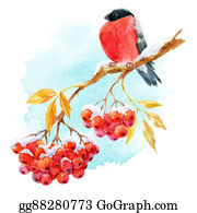 Cardinal-Bird - Bullfinch And Rowan