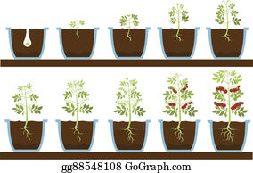 Plant-Life-Cycle - Plant Grow