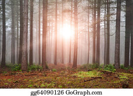 Landscape of forest with dense fog in Autumn Fall with sun bursting through trees