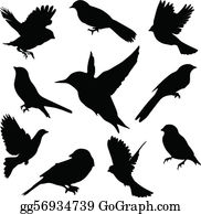 Set Birds. Vector