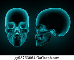 Side Skull Stock Illustrations - Royalty Free - GoGraph
