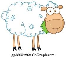 Barnyard Sheep Eating Grass