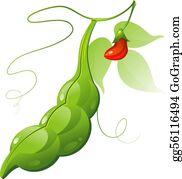 Soybean Clip Art - Royalty Free - GoGraph