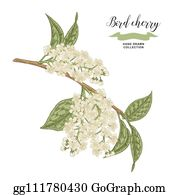 Royalty Free Bird Cherry Clip Art Gograph