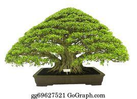 Bonsai Stock Photos Gograph