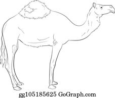 Camel Drawing Clip Art - Royalty Free - GoGraph