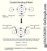 diagram to illustrate covalent bonding in water with a fully labelled  diagram