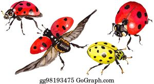 187364857ee7c Stock Illustration - Exotic ladybug wild insect in a watercolor ...