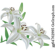 Lily clipart, Lily Transparent FREE for download on WebStockReview 2020