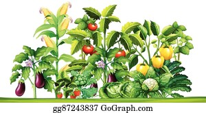 Admirable Vegetable Garden Clip Art Royalty Free Gograph Download Free Architecture Designs Jebrpmadebymaigaardcom
