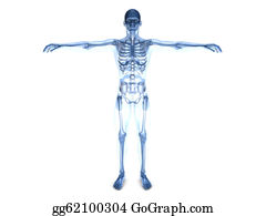 orthopedic stock illustrations  royalty free  gograph