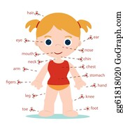 Body Parts Clip Art Royalty Free Gograph
