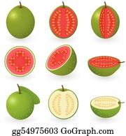 guava clip art royalty free gograph guava clip art royalty free gograph